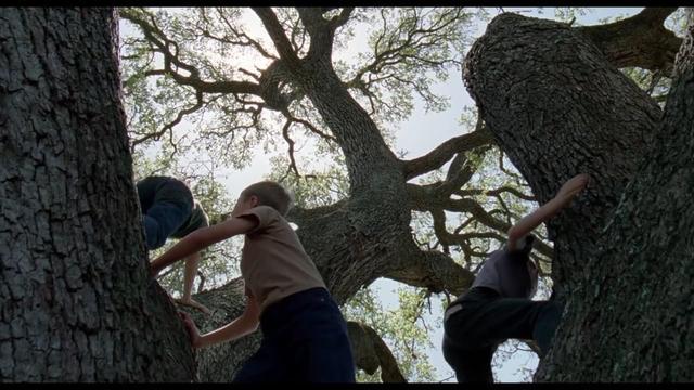 画像1: Tribute to Emmanuel Lubezki vimeo.com