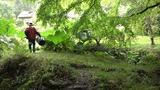 画像1: パリの展覧会で30万人を魅了したフランスを代表する庭師ジル・クレマン。彼の庭が語りかけるものを切り取った民俗誌的ドキュメンタリー『動いてる庭』!