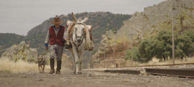 画像: ドンキー・ホーテ Donkeyote 監督:チコ・ペレイラ Chico Pereira スペイン、ドイツ、イギリス/2017/86 分