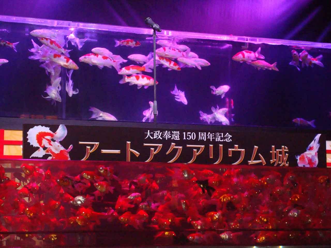 画像: 大政奉還150周年記念 アートアクアリウム城 ~金魚の舞~