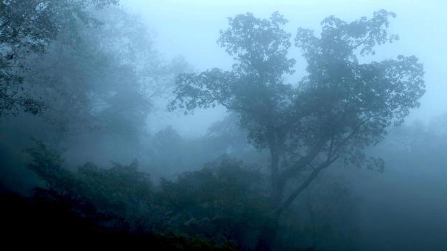 画像2: 世界10冠『アルビノの木』凱旋上映 スペシャル対談