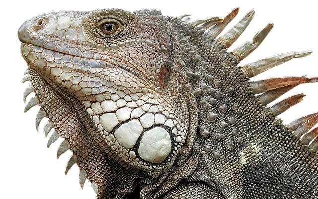 画像: キアラ・マストロヤンニ主演 カアン・ミュジデジ監督 最新作『イグアナ東京(Iguana Tokyo)』とは?