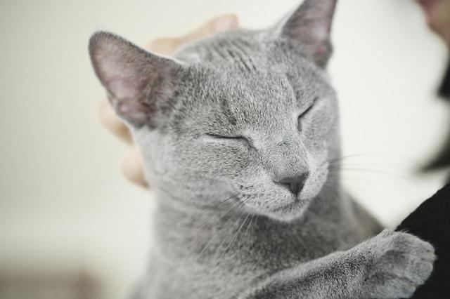 画像3: ©2018「猫は抱くもの」製作委員会