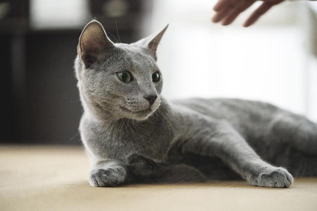 画像5: ©2018「猫は抱くもの」製作委員会