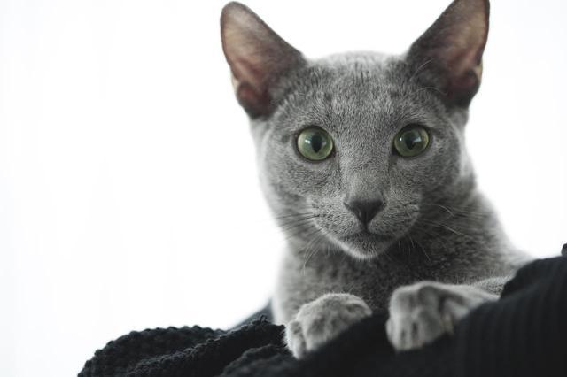 画像4: ©2018「猫は抱くもの」製作委員会
