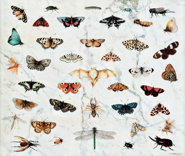 画像: ヤン・ファン・ケッセル1世 《蝶、カブトムシ、コウモリの習作》 1659年  Private Collection, USA