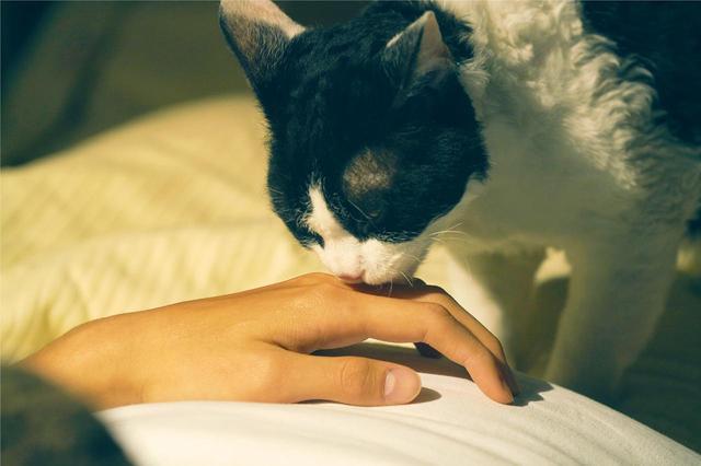 画像2: ©2018「旅猫リポート」製作委員会 ©有川浩/講談社