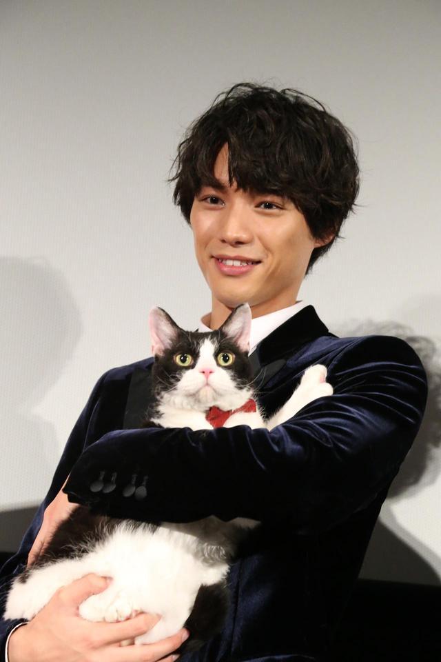 画像1: 映画『旅猫リポート』東京映画祭史上初となる愛猫ナナと一緒にレッドカーペットに登場!福士蒼汰、ナナ、広瀬アリス、三木康一郎監督!
