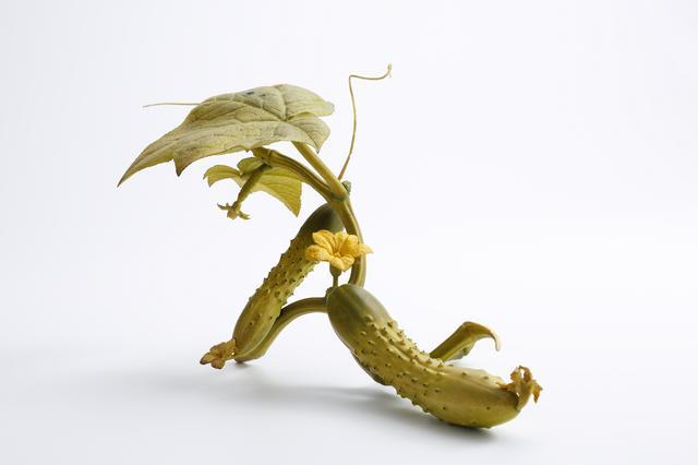画像: 【牙彫】安藤緑山《胡瓜》