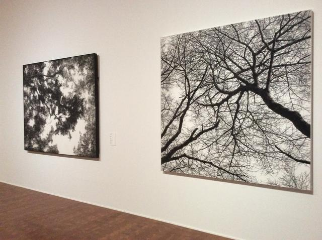 画像: 左:日高理恵子《葉光》1983年 右:日高理恵子《樹を見上げてⅤ》1991年 photo©︎cinefil