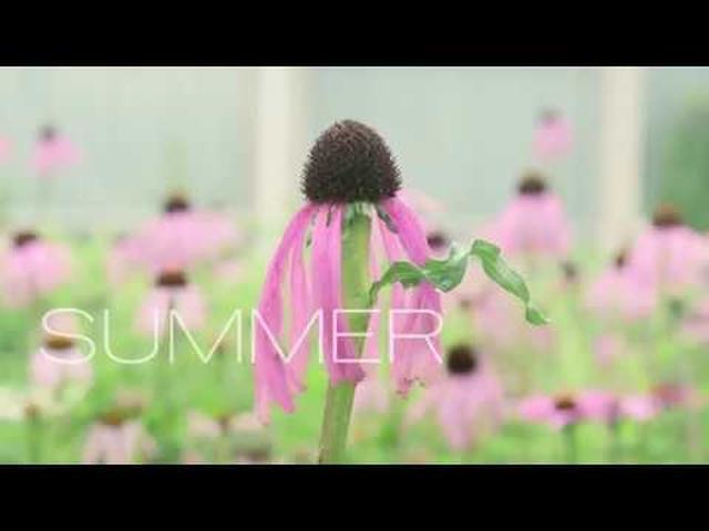 """画像: 最先端の""""植物の魔術師""""のドキュメンタリー『FIVE SEASONSガーデン・オブ・ピート・アウドルフ』予告 youtu.be"""