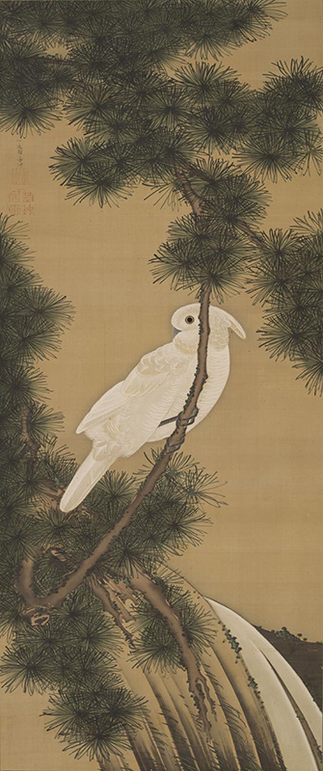 画像: 《老松鸚鵡図》絹本著色 個人蔵