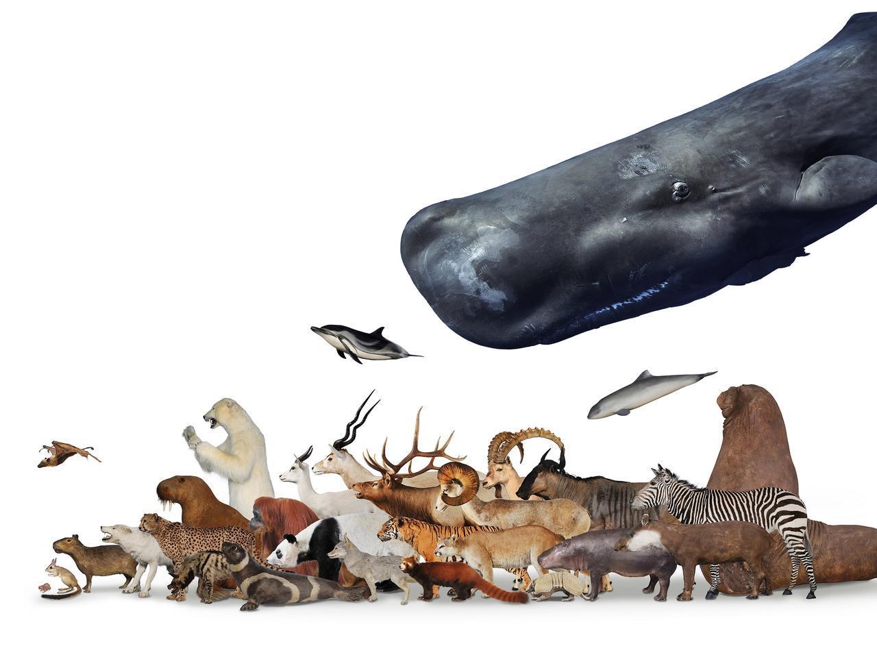 画像: 「哺乳類大行進イメージ」