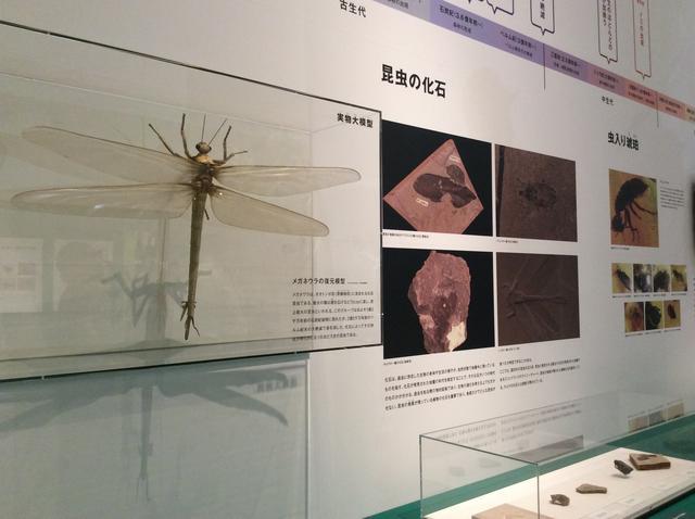 画像2: 特別展「昆虫」展示風景 大阪自然史博物館 photo©︎cinefil