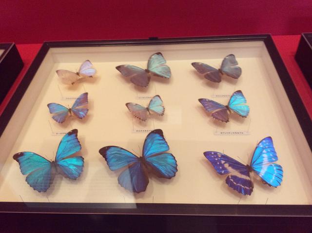 画像3: 特別展「昆虫」展示風景 大阪自然史博物館 photo©︎cinefil