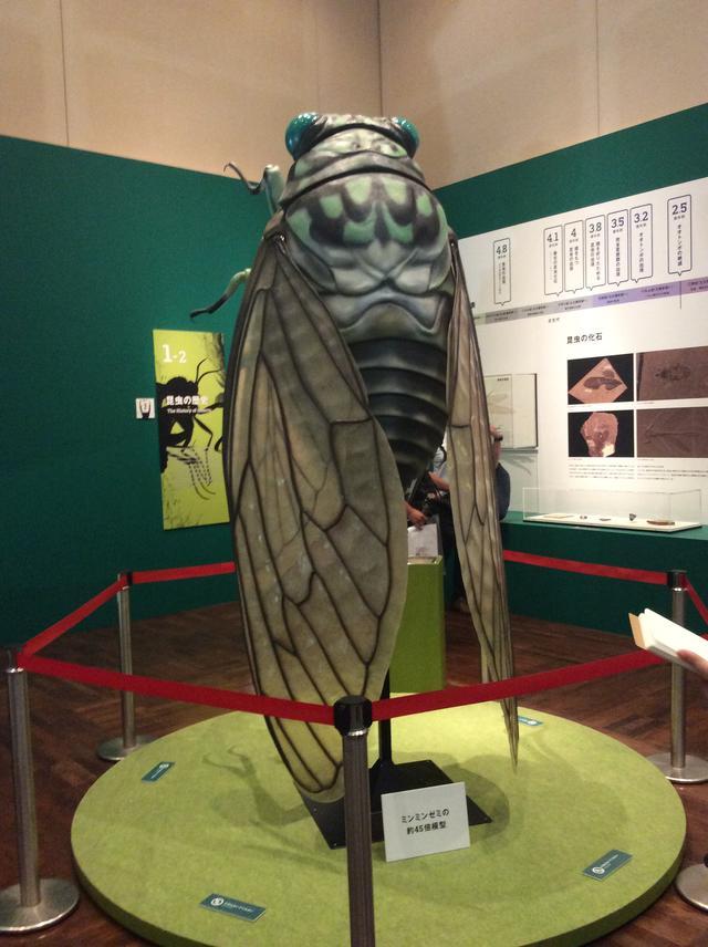 画像1: 特別展「昆虫」展示風景 大阪自然史博物館 photo©︎cinefil