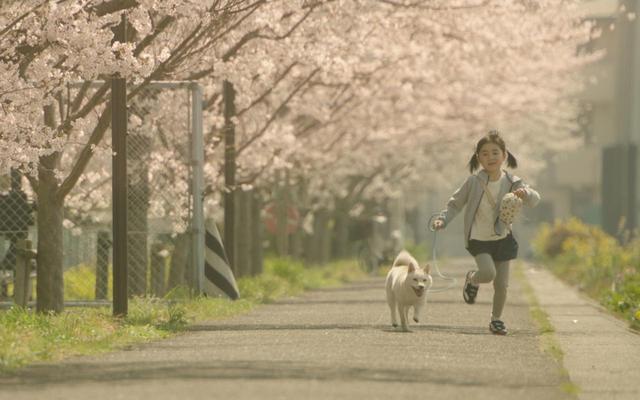 画像6: ©2019映画「駅までの道をおしえて」production committee