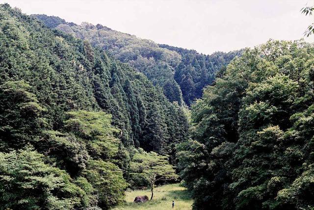 画像1: グランプリ 『おばけ』監督:中尾広道 (39歳/大阪府出身/上映時間:64分)