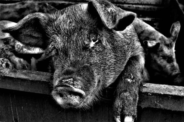 画像3: ©︎大田原愚豚舎