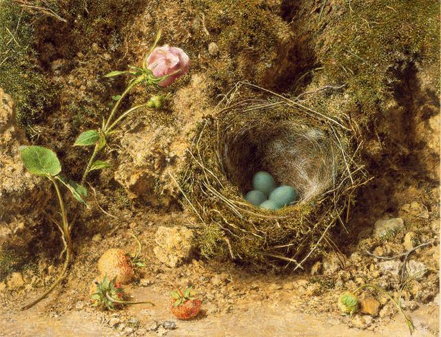 画像: .ウィリアム・ヘンリー・ハント《ヨーロッパカヤクグリ(イワヒバリ属)の巣》1840年頃、ベリ美術館 © Bury Art Museum, Greater Manchester, UK