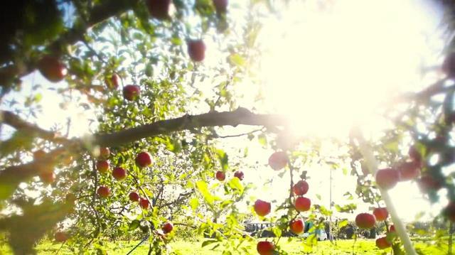画像3: 食と農の新しい未来が見えてくる腸活エンターテイメント・ドキュメンタリー『いただきます ここは、発酵の楽園』-ナレーションは小雪。