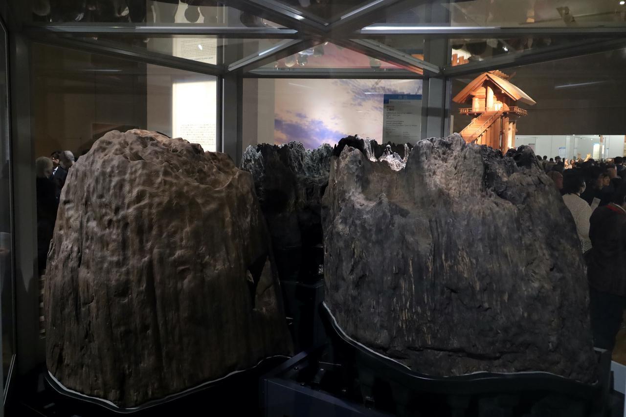 画像: 島根県・出雲大社の境内から出土した「心御柱」 鎌倉時代・正治2(1248)年 島根・出雲大社 重要文化財 かつての巨大本殿の中心柱。後ろに見えるのはかつてのその巨大本殿の1/10縮尺の推定模型