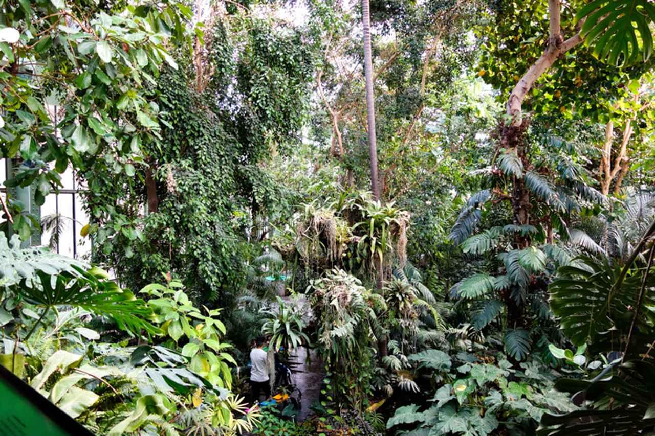 画像: 鬱蒼とした熱帯のジャングルを再現した温室はアンリ・ルソーが《夢》の制作時に観察に訪れたといわれる。