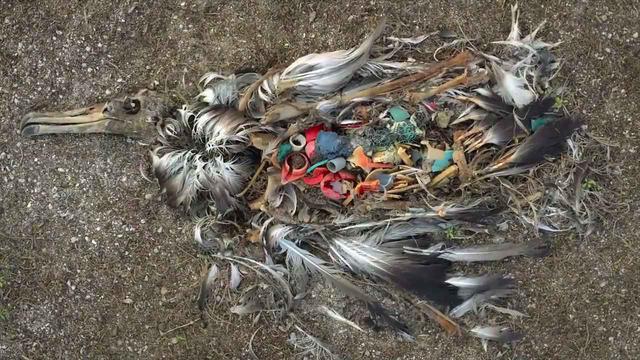 画像2: 海がプラスチックで溢れている―。 わたしたちに何ができるのだろうか