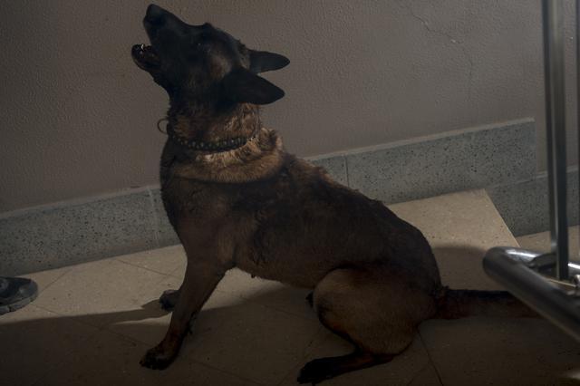 画像3: 『VS 狂犬』