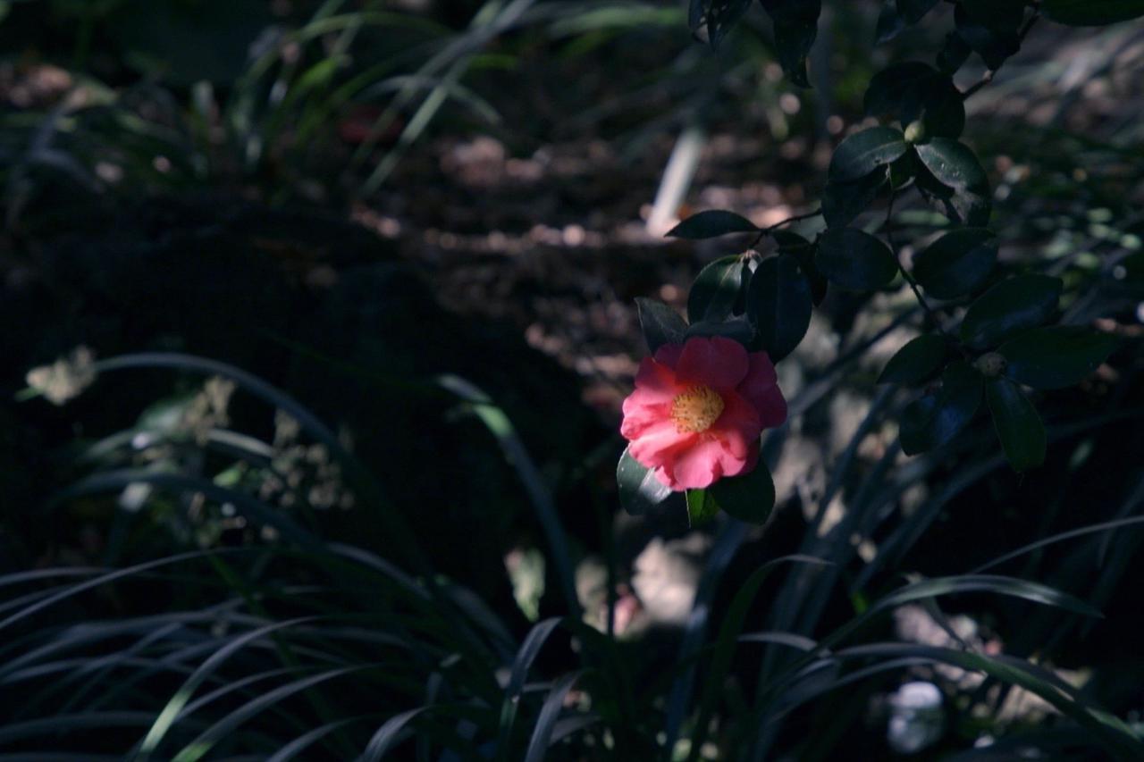 """画像13: ©2020""""A Garden of the Camellias"""" film partners"""