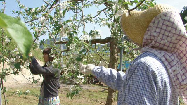 画像: 米崎町りんご農家の記録 [ 劇場初上映 ]