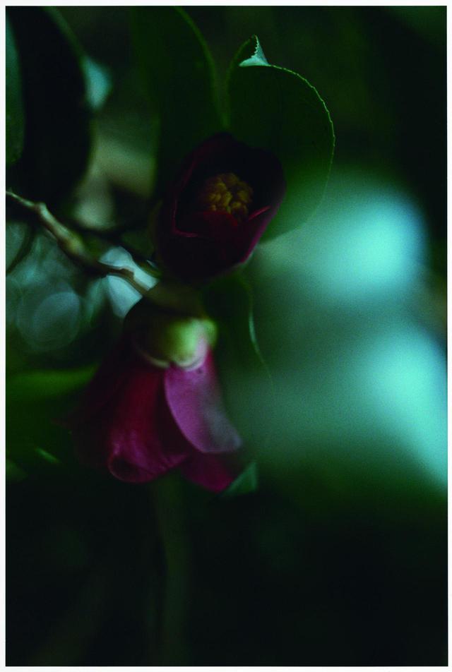 """画像1: ©2020 """"A Garden of Camellias"""" Film Partners"""