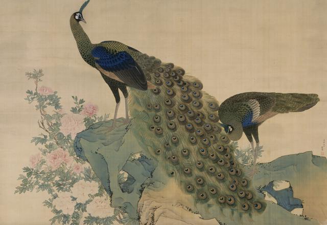 画像: 重要文化財 《牡丹孔雀図》 円山応挙筆 一幅 絹本著色 江戸時代 明和八年(1771) 相国寺蔵