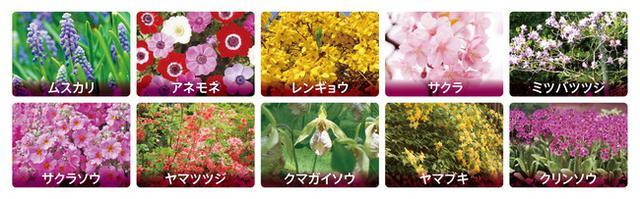 画像: 芝桜のほかにも色鮮やかな花たち