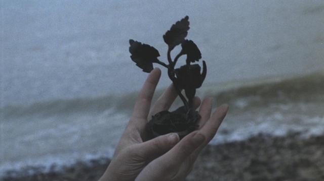 画像2: 『鉄の薔薇』(原題:La Rose de Fer) (1973/仏/80分/ヨーロピアン・ビスタ/監督ジャン・ローラン)