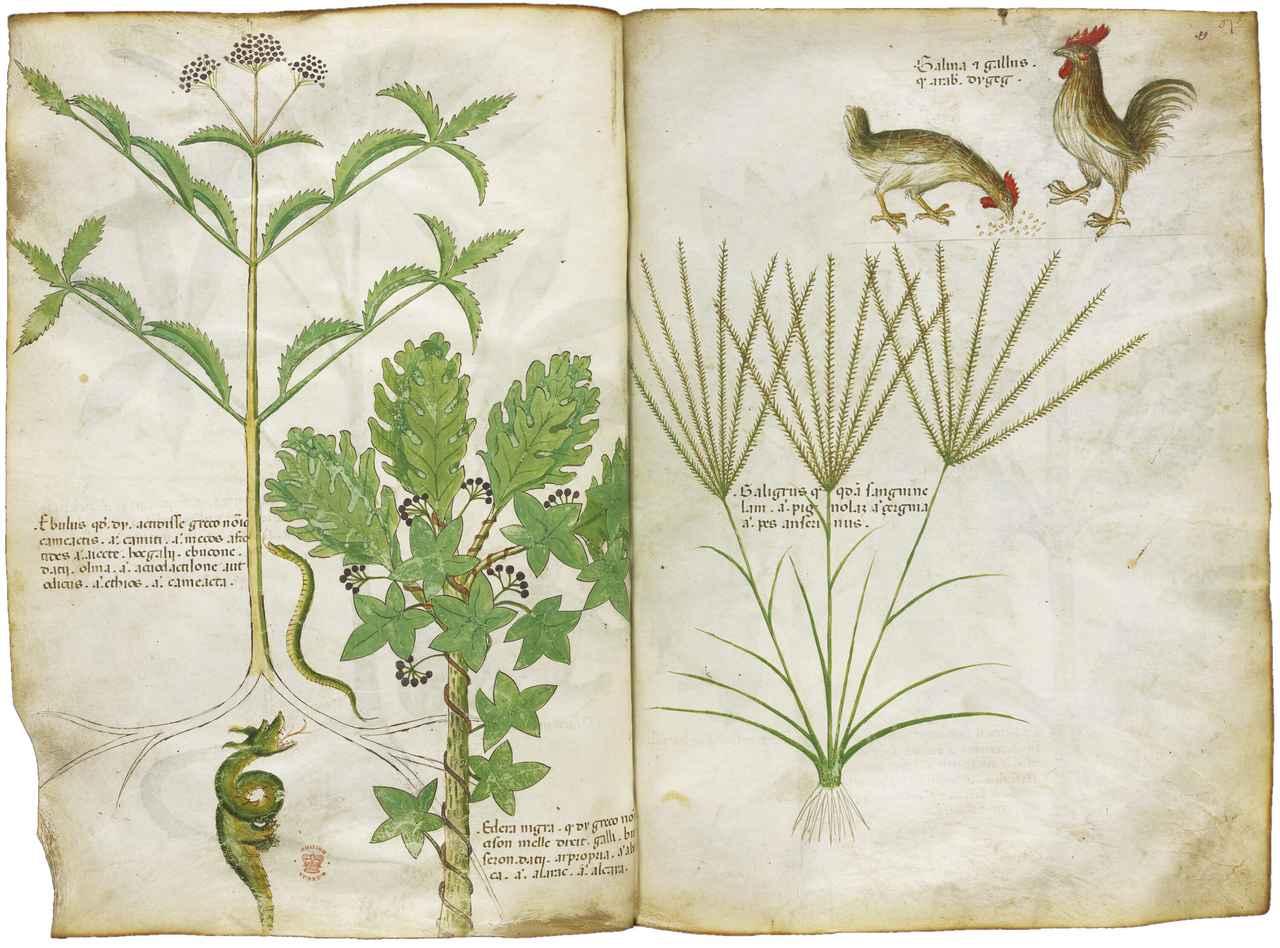 画像: 「薬草書」 15世紀 大英図書館蔵 ©British Library Board