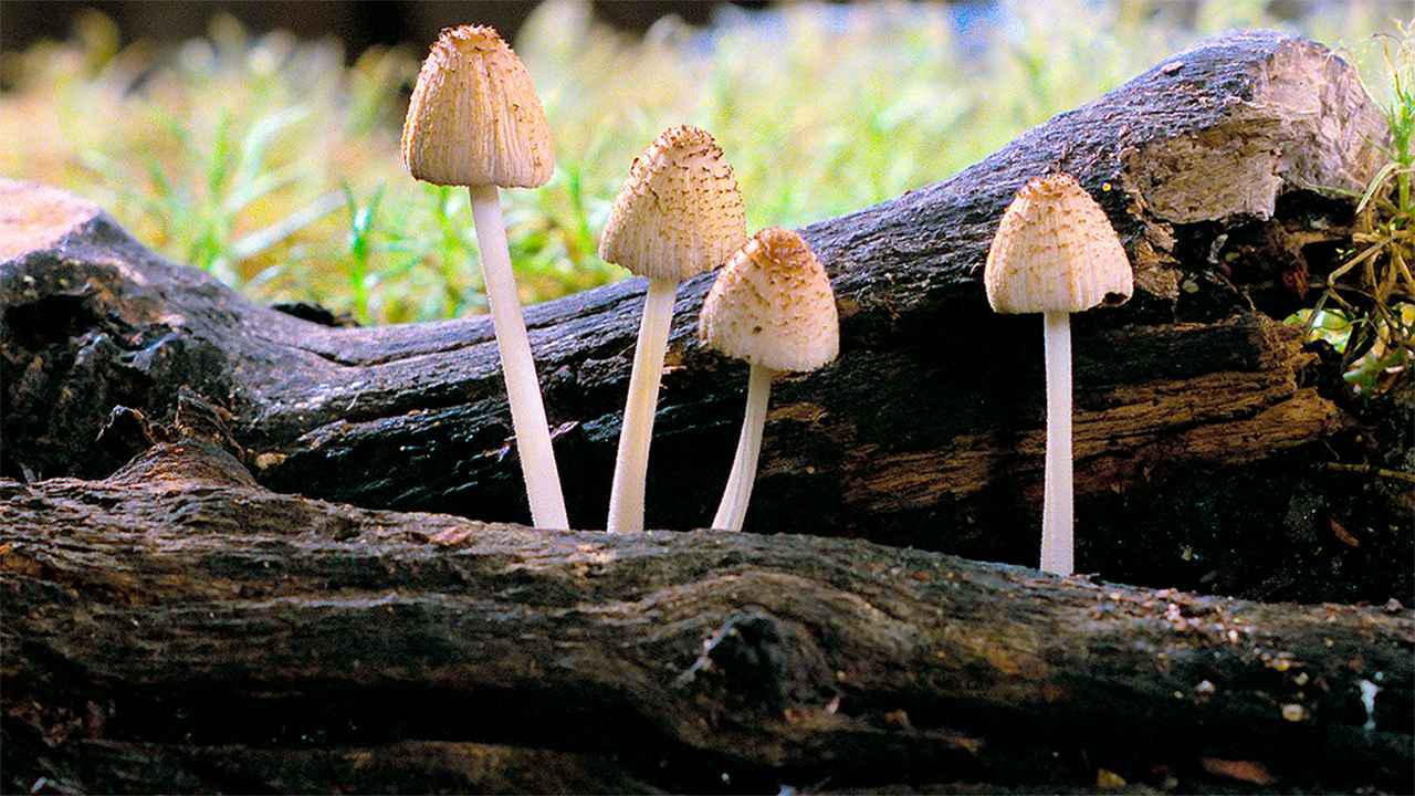 画像3: © 2018, Fantastic Fungi, LLC