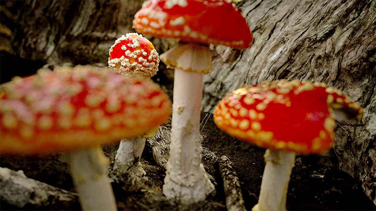 画像5: © 2018, Fantastic Fungi, LLC