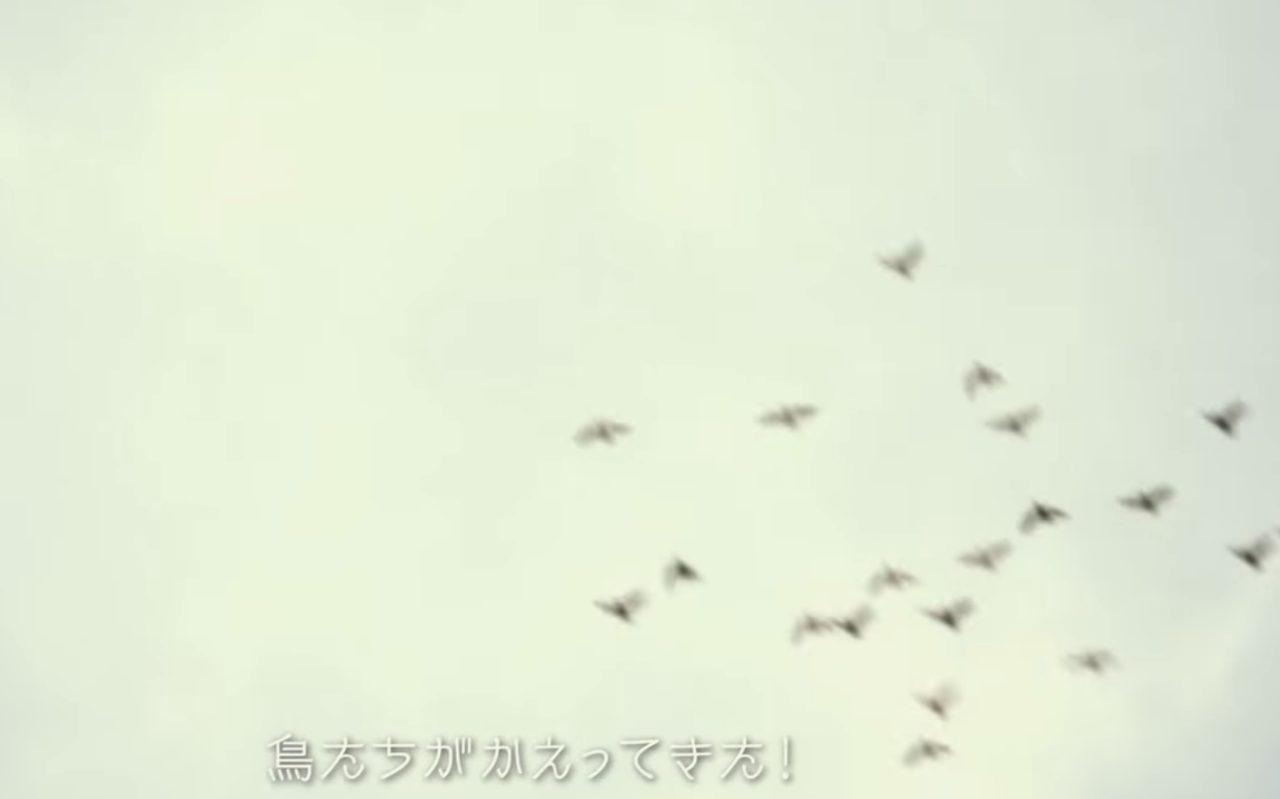 画像: 鳥たちも祝福に! www.youtube.com