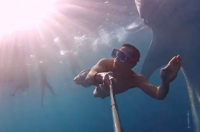 画像: こわっ。サメが集まってきた・・・ www.youtube.com