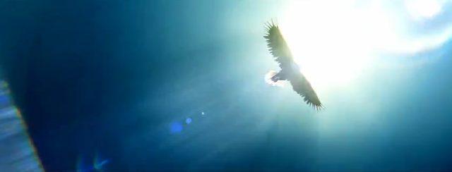 画像: 空高く飛ぶ鷲の姿が。