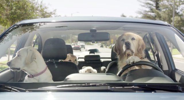 画像: SUBARUの面白かわいい海外CM! 犬の家族の映像が可愛すぎる! - LAWRENCE(ロレンス) - Motorcycle x Cars + α = Your Life.
