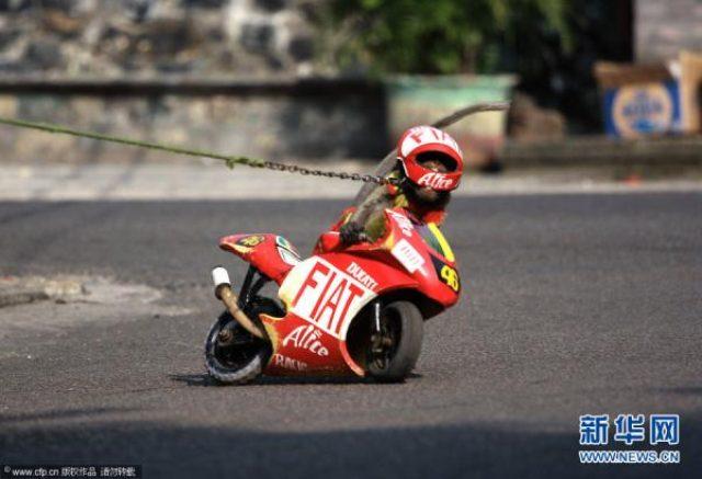 画像: www.focus-asia.com