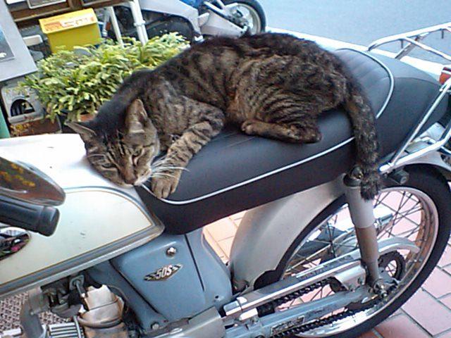 画像: baikehamahama.seesaa.net