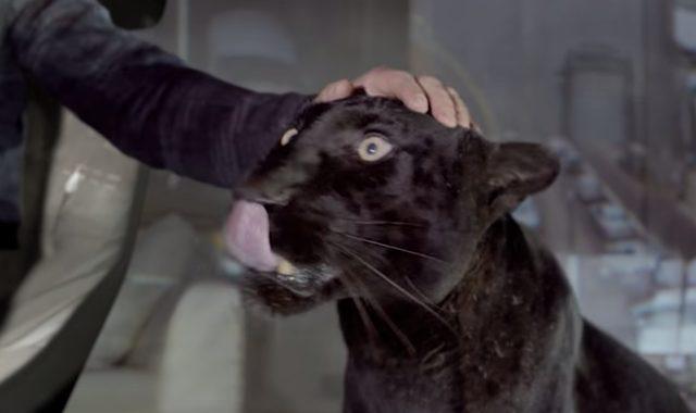 画像: 膝元には黒豹。んー、これってブラックパンサーだけどジャガーではない気がしますねえw www.jaguar.co.jp