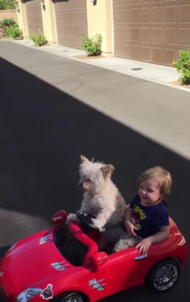 画像1: おもちゃの車で遊ぶ犬とこどもが可愛すぎる!!!!!