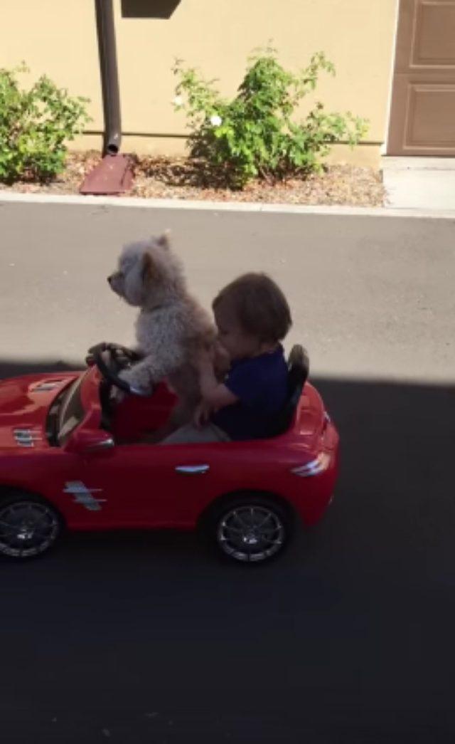 画像: 【可愛すぎて反則!!】運転する犬と助手席に座るおとこのこの動画。 - LAWRENCE(ロレンス) - Motorcycle x Cars + α = Your Life.