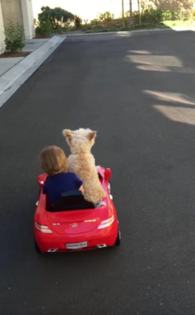 画像3: おもちゃの車で遊ぶ犬とこどもが可愛すぎる!!!!!