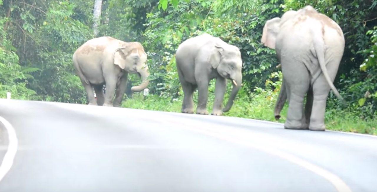 画像: 東北部のカオヤイ国立公園で撮影された映像が衝撃的!