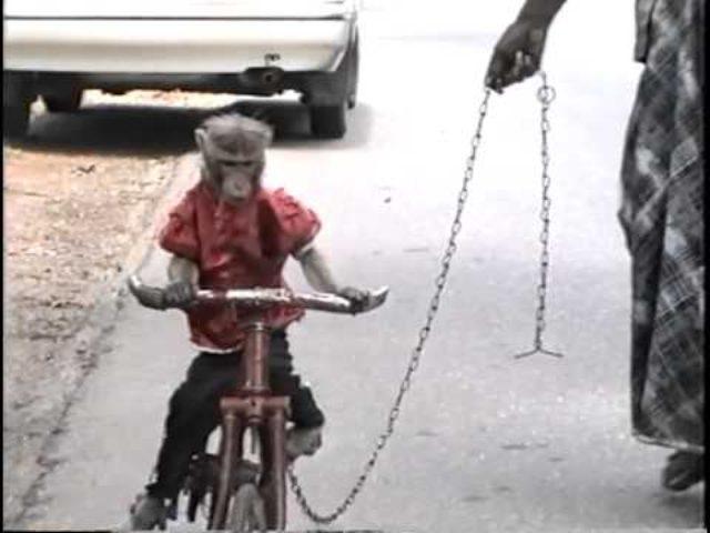 画像: Monkey Riding a Bicycle in Srilanka youtu.be